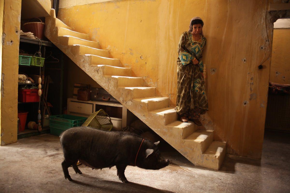 Cochon gaza bayal belal